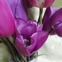 印鑑照合とお花
