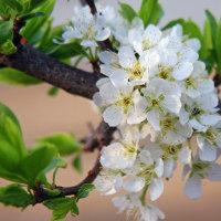 ☆☆☆ 花粉の飛散に悩まされる日々 悲喜こもごもでした~水曜日・・・
