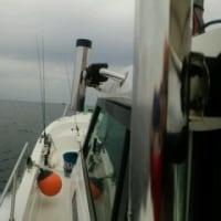 日曜日の船釣り