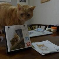 ネコ カレンダー