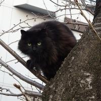公園猫ちゃん 2017 0319