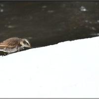 雪で水分補給kana