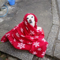 寒いから。