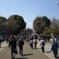今年の桜シリーズ