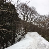 彌彦神社詣で その4