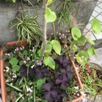 今年の目標は庭づくり
