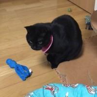 猫マトで奈良マト展へ