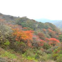 くじゅう 牧ノ戸峠_沓掛山 付近 ~ 2016年10月25日の紅葉状況
