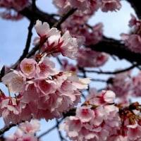 堺市も春に...