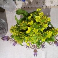 おはよー!菜の花