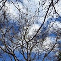 梢を見せる木々