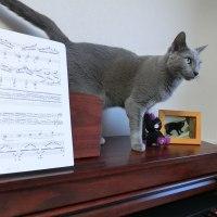 ピアノ大好き。