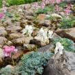 白馬五竜高山植物園(7)