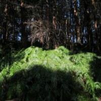 柏「手賀の丘公園」