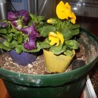 冬の花 2