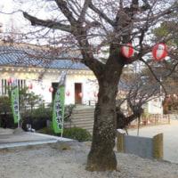 福山城公園の桜咲く