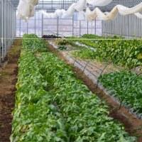 極寒の収穫体験&贅沢ランチ in おかやち農園