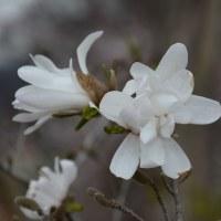 塩尻市片丘内山さん宅の坪庭・・・春が一杯・・・楽しい春