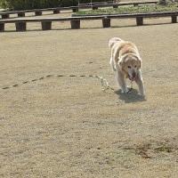 公園で走ったよ