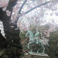 上野の桜 3・29