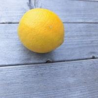 サイパンレモン