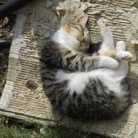 子猫も暖かそう...