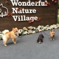 ねねまるとんで wanderful nature villageに行く