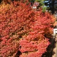 紅葉、自然
