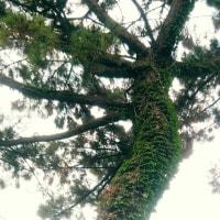 下から上まで緑の葉(グリーンベール)