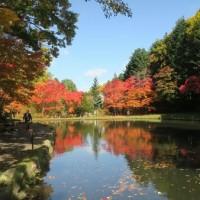紅桜公園 札幌