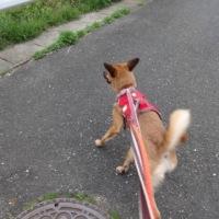 ゆっくり歩こう!