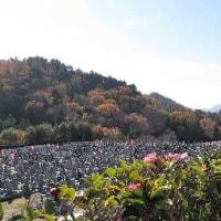 深まる「霊園」の秋