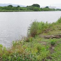 ネジバナに会いに河原に行く・CRISISの初回の現場を確認する