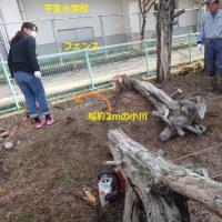 平生小学校脇の小川側に倒れかけた木を伐採