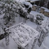 大雪でした><