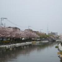 桜を見ながら歩いてみた