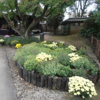 スポコミ・カワラ版 11月27日(日)先勝