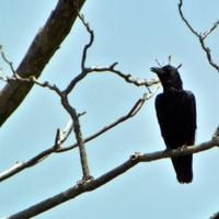 野ねずみ野鳥探索 響灘緑地グリーンパークの探鳥会に参加