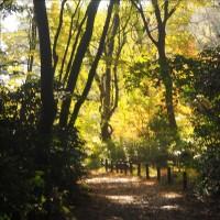 目黒の自然教育園 2 東京の中心部とは思えない山の深さ・・・