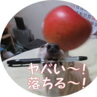 pen ~♪~Apple ~♪~REMONちゃんの方が・・・