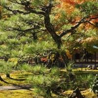 秋色の北鎌倉の紅葉巡り(長壽寺)その9