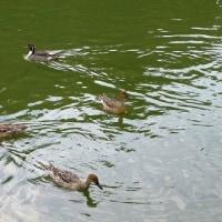 冬鳥の飛来状況 (名城公園、黒川)