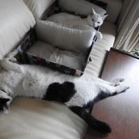今日は猫の日…我が家のしゅう嬢の事!