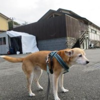 稲村ケ崎を散歩したよ