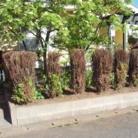 植木の散髪、