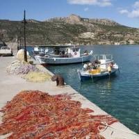 地中海魚類資源が警告レベルまで劣化