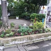 夏の花壇に衣替え第一弾【2016年6月25日】
