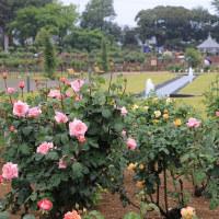 170513バラ園まつり開会式、ローズクイーン