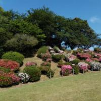 チコさんとj公園の花