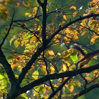樹上を走る